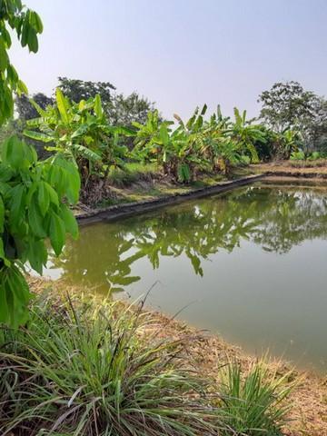 ที่ดิน พร้อมสวนผลไม้ 3 ไร่ 2 งาน 81 ตรว หางดง เชียงใหม่ ถมแล้ว ทำเลดี สุดๆ  มีน้ำอุดมสมบูรณ์ทั้งปี