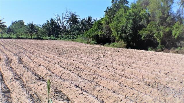 ขายที่ดิน3ไร่ บางพระ ชลบุรี สี่เหลี่ยม ติดถนนสายรอง ห่างมอเตอร์เวย์1กม.ราคา2.4ล้านต่อไร่ 0831604848