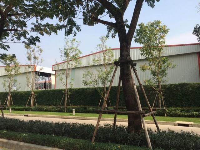ให้เช่าโกดัง ทำเลดี บางกรวย นนทบุรี พื้นที่ใช้สอย 832 ตรม.