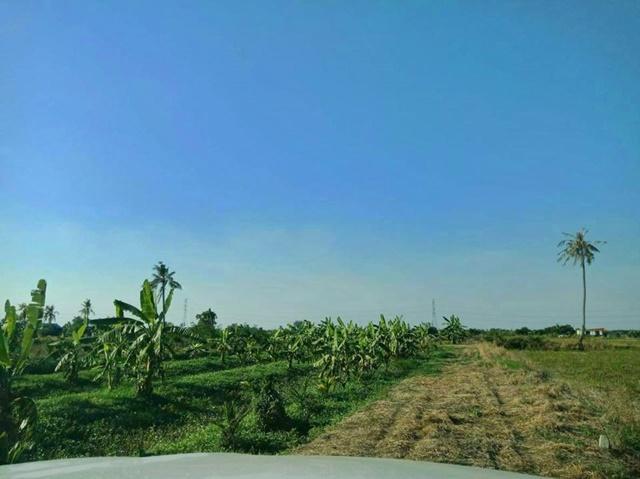 รหัส 1226 ขาย 3000000 ที่ดินสวน 3 ไร่กว่า พร้อมบ้านชั้นเดียว บางเลน นครปฐม ขายถูกด่วนเพราะไม่มีคนดูเเล
