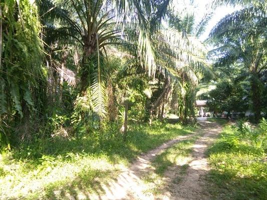 ขายที่ดินพร้อมสวนปาล์มเล็กน้อย ตำบลท่ายาง อำเภอเมืองชุมพร ชุมพร 1 ไร่