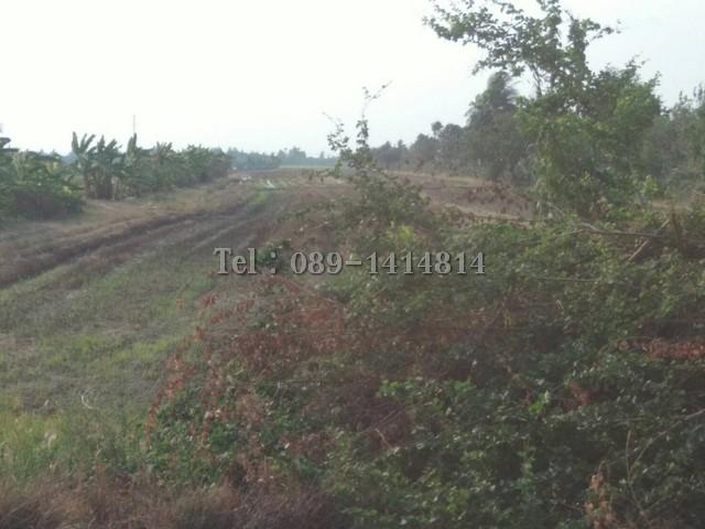 ขายที่ดิน 2 แปลงคู่ 25 ไร่ๆ ละ 1.5 ล้านบาท ซอยลาดหลุมแก้ว จ.ปทุมธานี